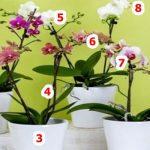 Egy kertészetben lestem el ezt a 10 orchidea-trükköt: azóta is hálás vagyok, mert egytől-egyig nagyon hasznos